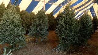 WPTV-JUNO-BEACH-CHRISTMAS-TREES.jpg