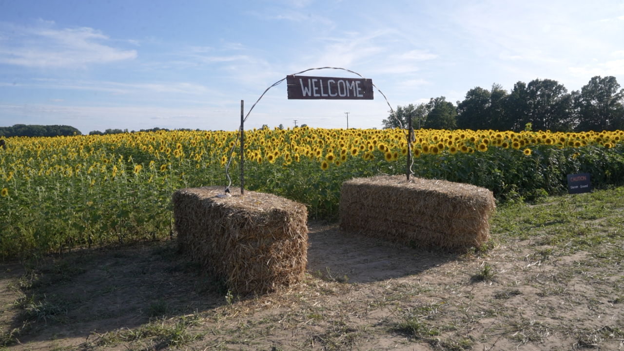 The Munsells created a path and added photos opps throughout their sunflower fields