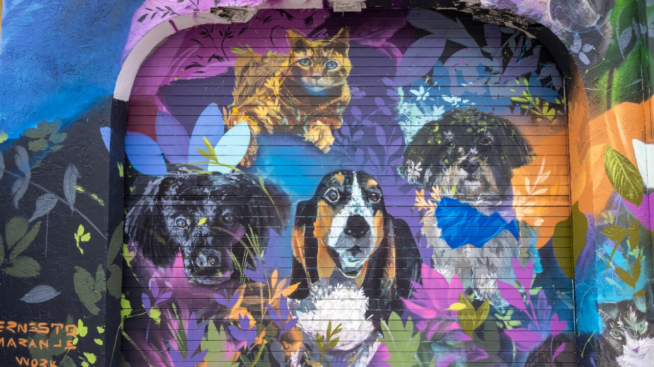 The _Ultimate Pet Portrait_ mural in Wynwood, organized by the pet supply company, Chewy (2).jpg