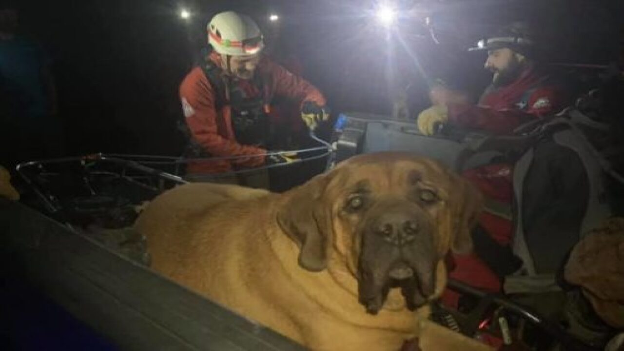 Rescuers Carried This 190-pound Dog Down A Mountain And The Video Is Adorable