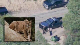 Officials say Colorado boy attacked by mountain lion 'doing well in light of the circumstances'