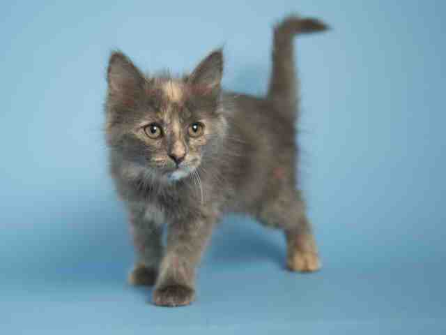 Adoptable pets from Maricopa County Animal Care and Control and Arizona Humane Society (10/25)