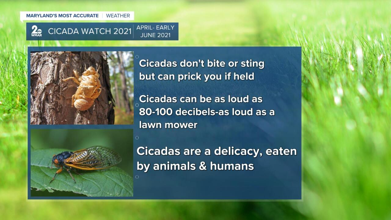 Cicada Watch 2021.jpg