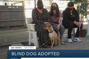 San Diego rescue dog without eye adopted by blind veteran