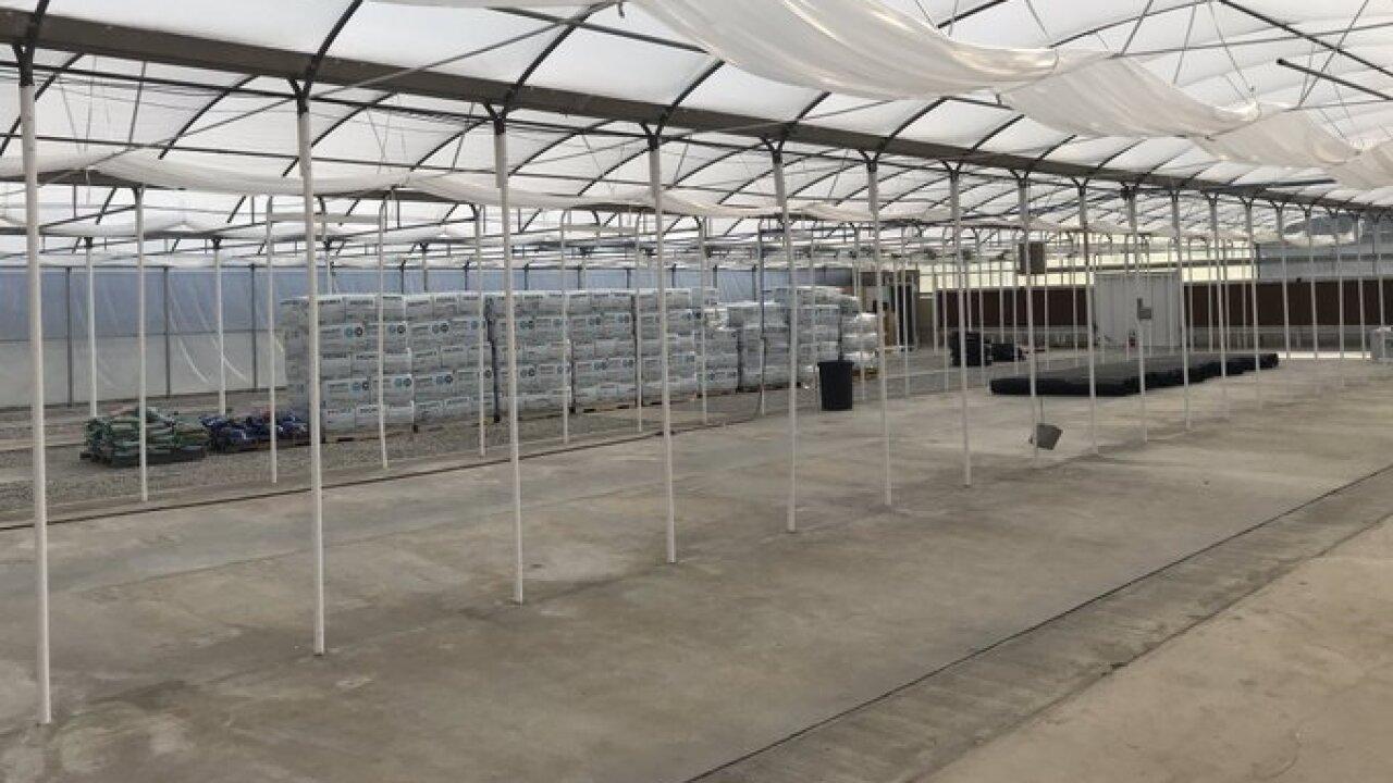 OXG medical marijuana greenhouse interior.jpg