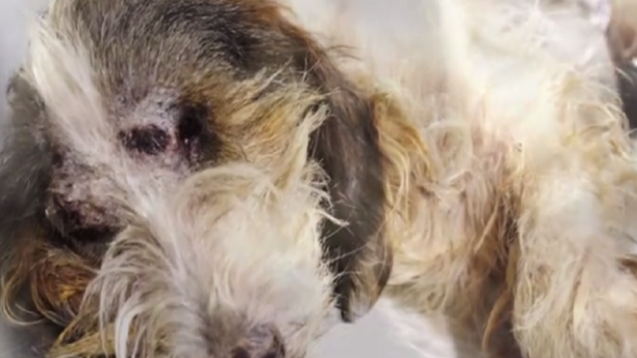 WATCH: Unbelievable recovery for dog thrown out of speeding car