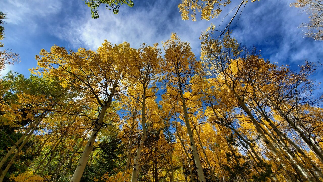 Golden Gate Canyon State Park_aspen