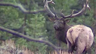 This Week in Fish and Wildlife: General hunting season starts Saturday