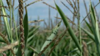 crops_generic.jpg