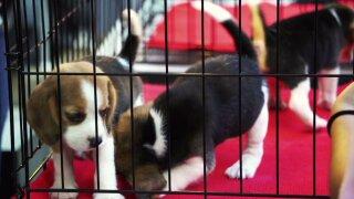 Puppies file photo.jpeg