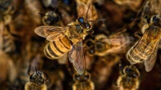 bees-4845211_1920.jpg