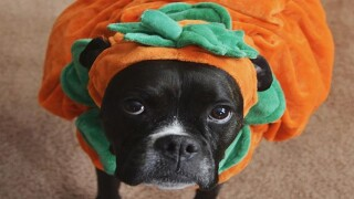 Halloween isn't always a treat for your pets: How to avoid a scary vet bill