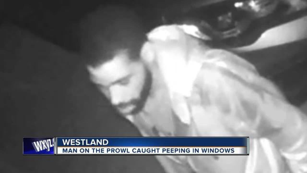 Westland prowler seen looking in home windows