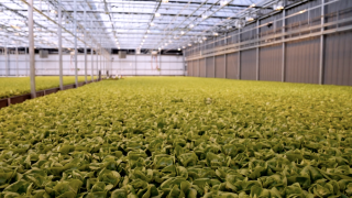 Local Bounti runs year-round growing operations, like this one in Hamilton, Montana. The company says it uses no pesticides and 90 percent less water and land than traditional farming.