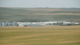 UM study highlights the role of Hutterite colonies in Montana's economy