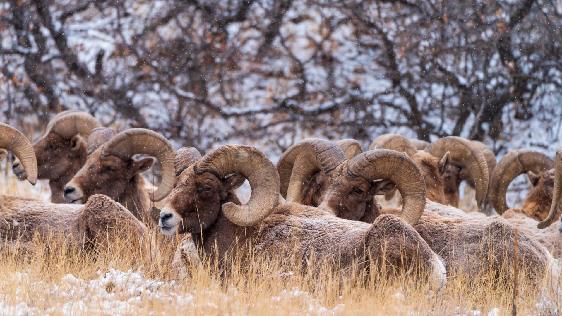 Rams Daniel Forster.jpg