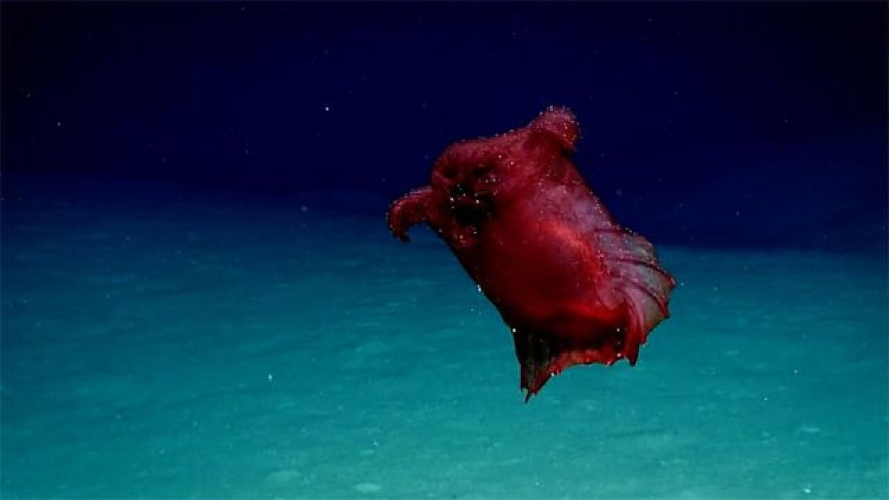 'Headless Chicken Monster' found floating deep in the ocean
