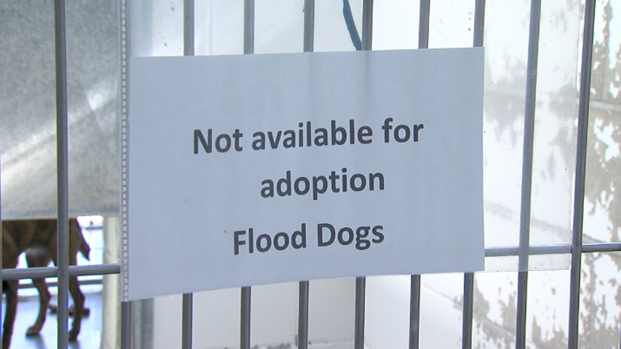 Pets flooding