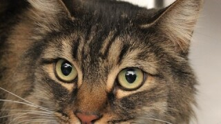 Adopt cats for $5 at Animal Foundation