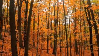 Video: Fall colors in Aman Park