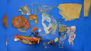 CPW Bear Trash.jpg