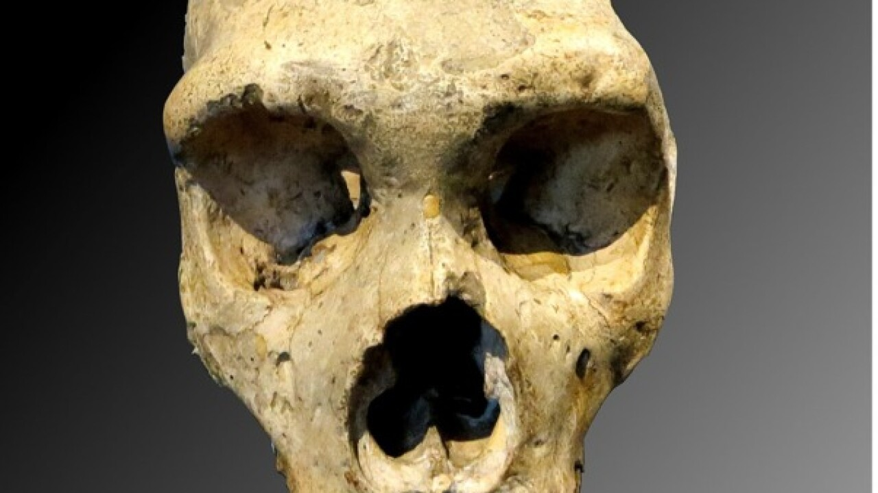 Lead exposure found in Neanderthal children