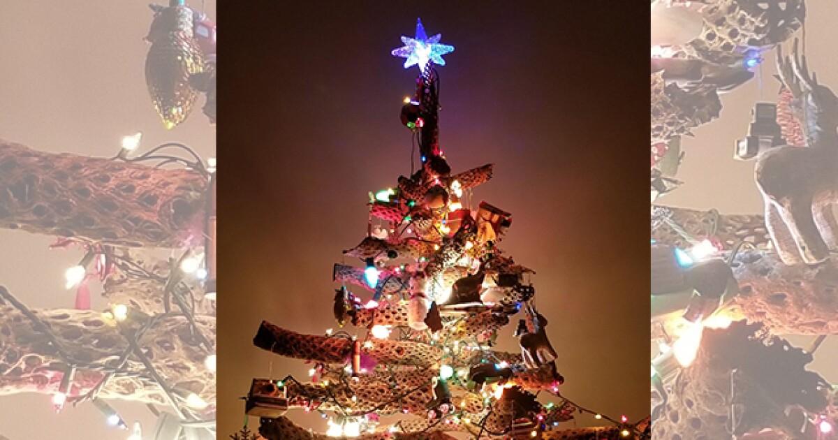 Cactus Christmas Tree.Arizona Family Builds Christmas Tree Made Of Dead Cactuses