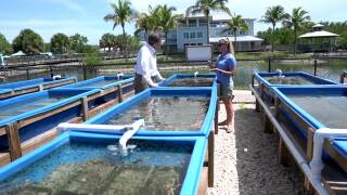 Michael Williams speaks with Dr. Lorae Simpson in seagrass nursery at Florida Oceanographic Society