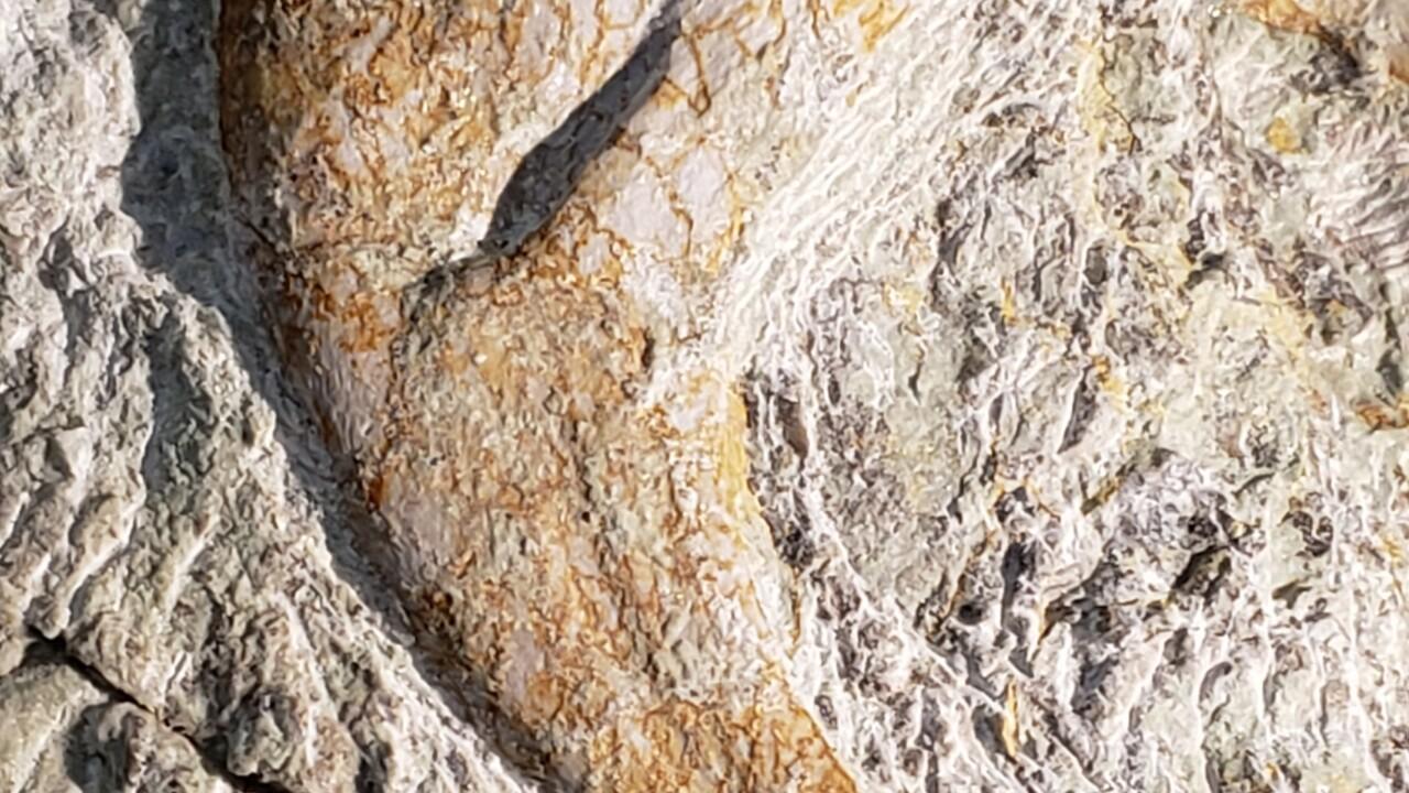 Utahraptor Fossils