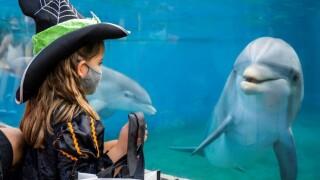 seaworld_spooktacular_dolphin.jpg