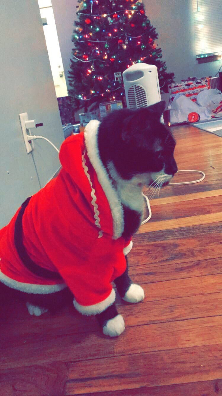 Alexandra Dodds sent in this picture saying My beloved Rudy in his Santa suit <3 Happy Holidays Guys!