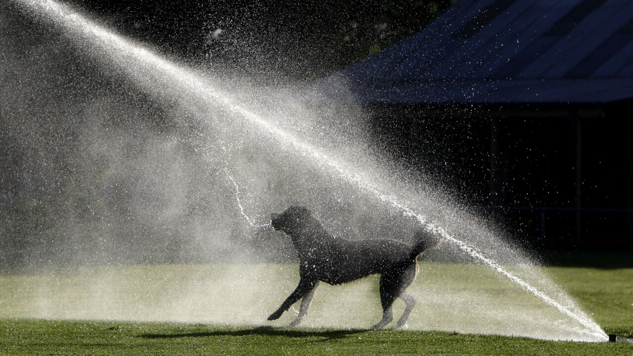 Australia Dog Sprinkler