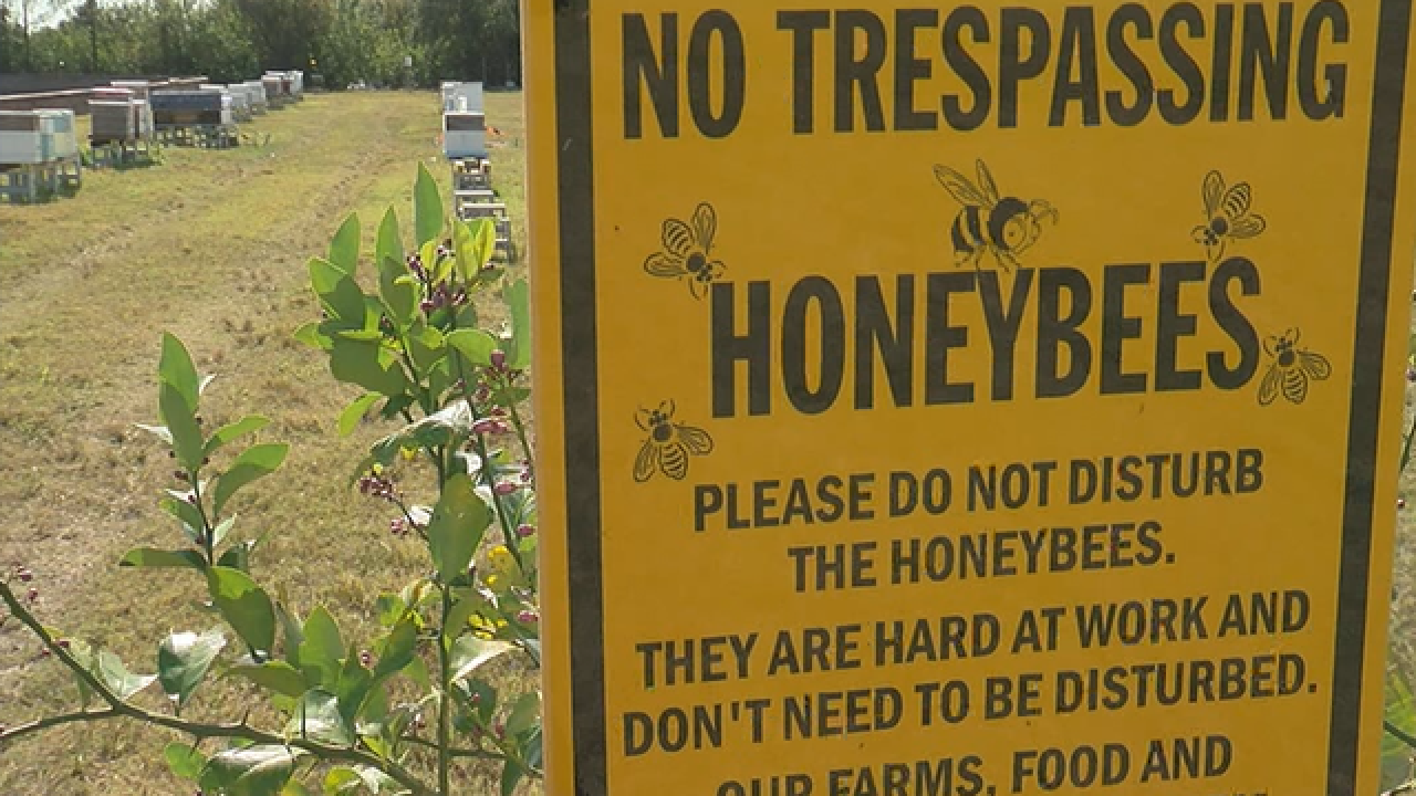 New rules could be bad news for beekeepers