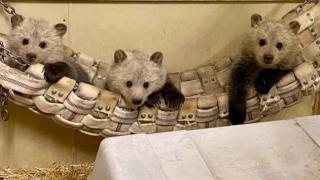 Bearizona new cubs