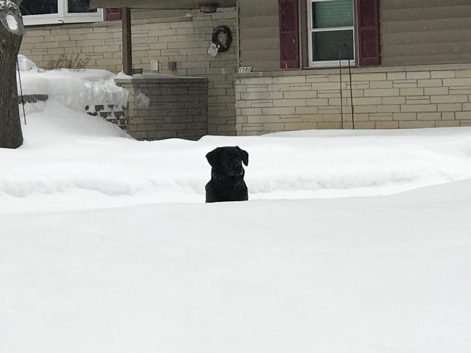 snow22.jpeg
