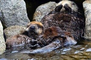 otter rescue 3.jpg