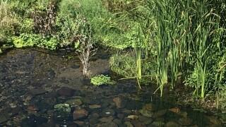 Life pours back into Santa Cruz River