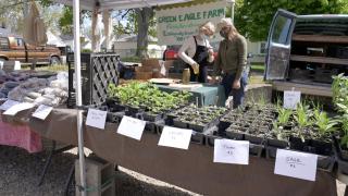 Green Eagle Farms of Onondaga at the Allen Neighborhood Center farmers market