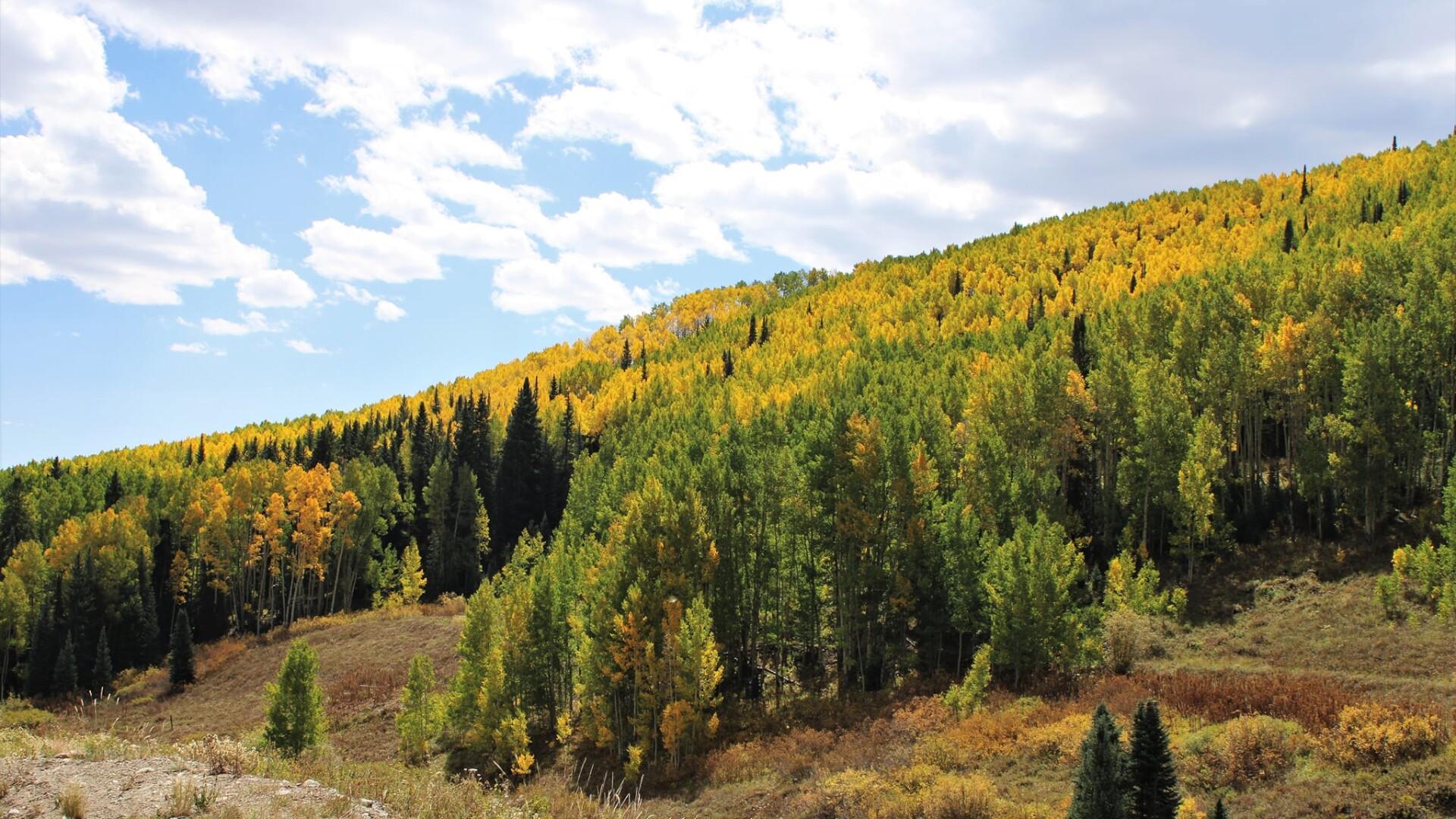 2Crested Butte Daniel Gee 2.jpg