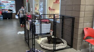 PACC popup kennel