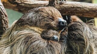 Virginia Zoo Sloth Photo 1.jpg