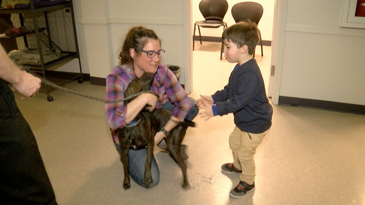 Mother and son reunited with dog after it was stolen