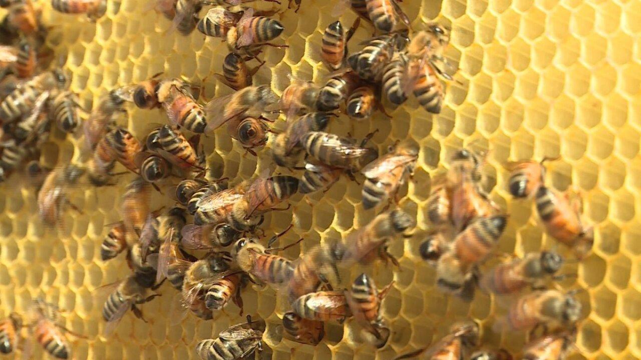 2019 Honeybee Festival will educate and entertain the wholefamily
