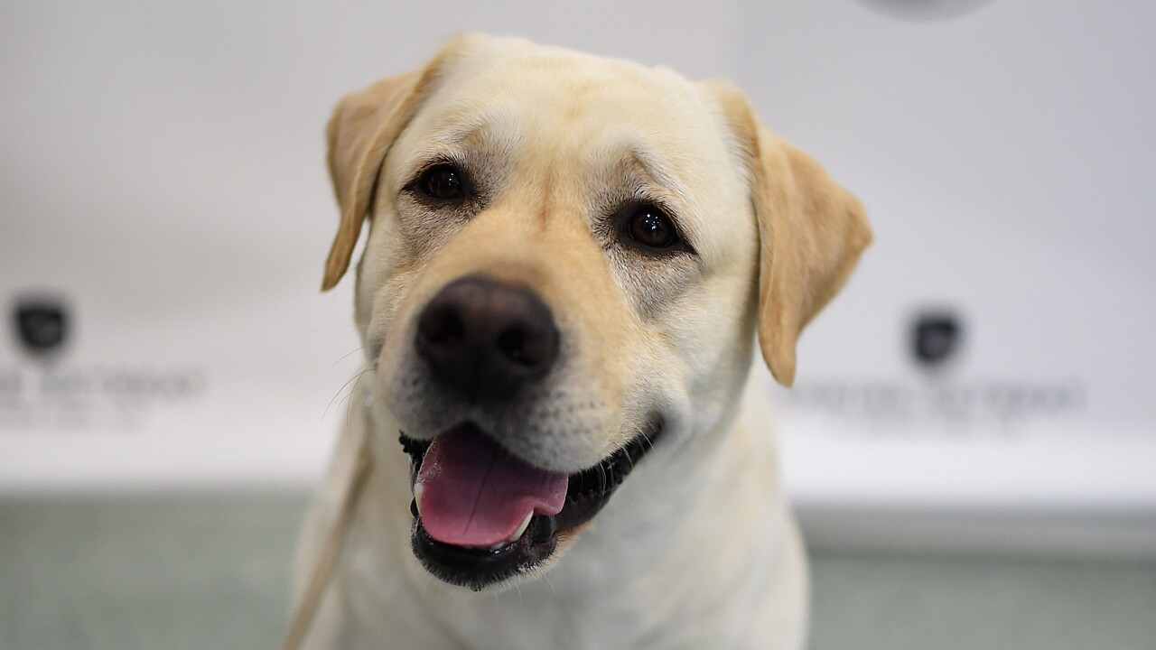 Happy National Puppy Day: This is America's favorite dog, according to the American Kennel Club