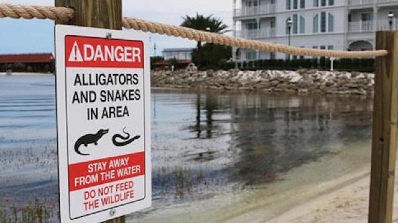 Gator captured on Georgia beach killed; head to be mounted