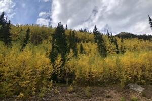 Guanella Pass Sept 21 2019_SButzer_changing aspens