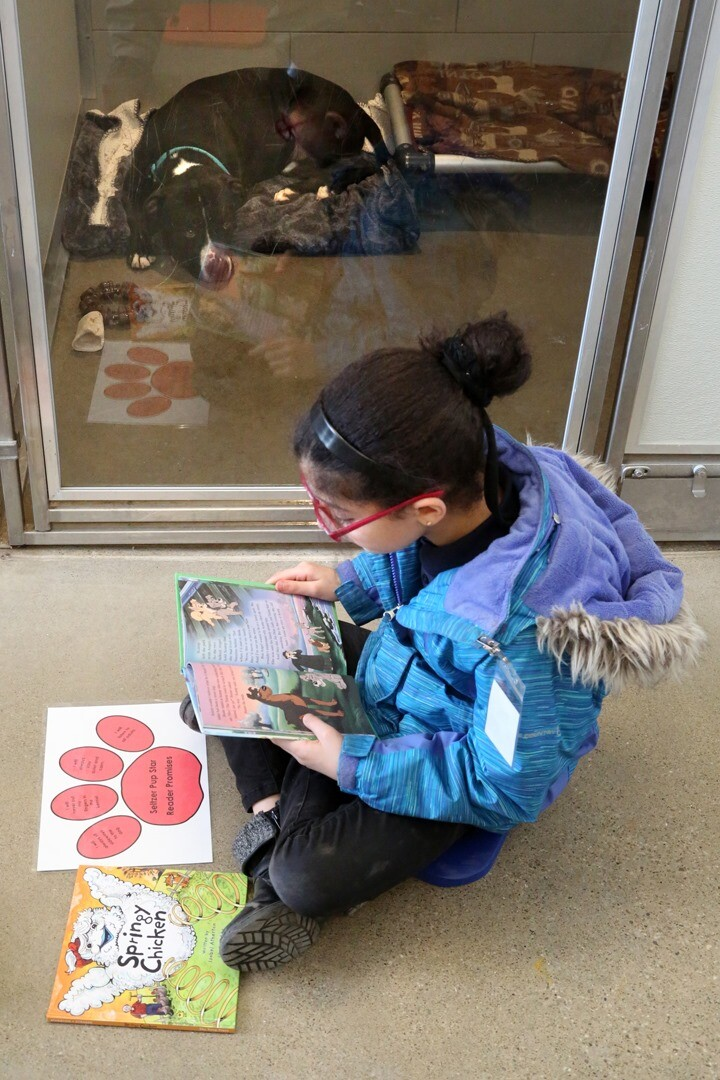 Students from Marion C Seltzer Elementary School read to dog at City Dogs.