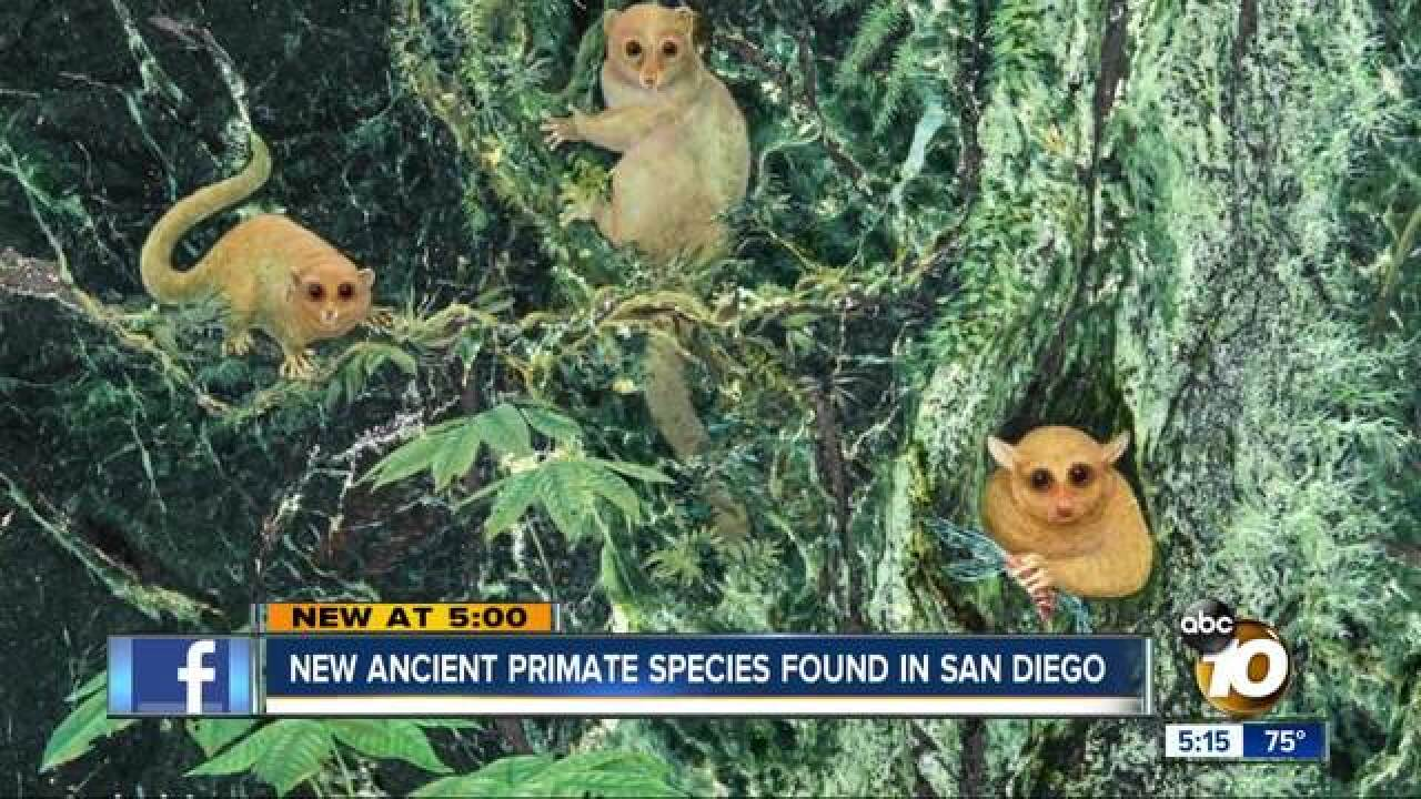 New ancient primate species discovered in San Diego