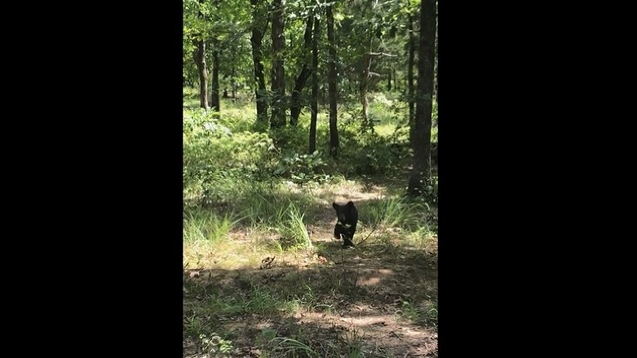 Cute black bear cub caught on video in Adair County