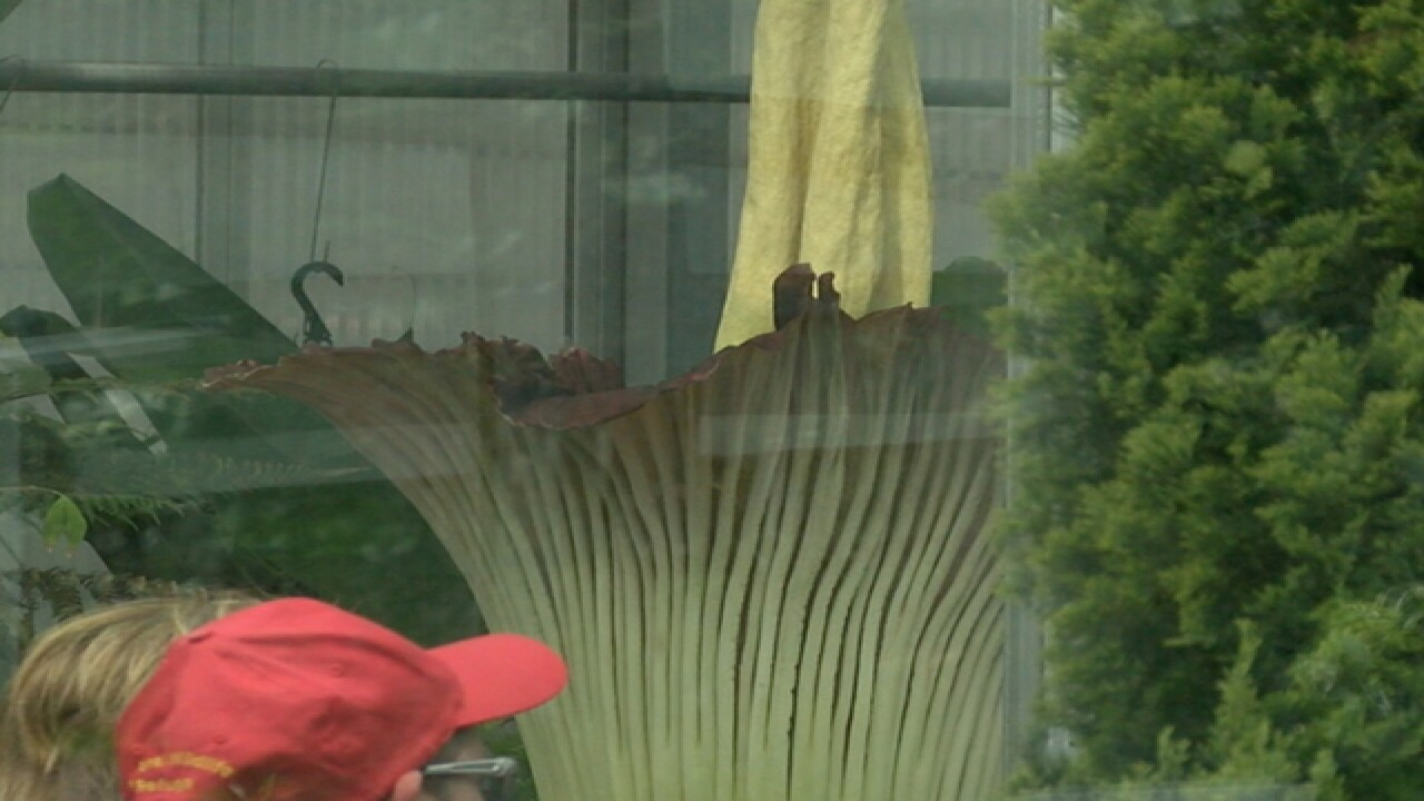 Day 1: Corpse Flower stinks up Denver